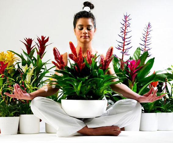Цветы влияющие на энергетику