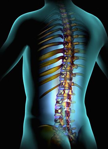 Спина стержень здоровья тела человека